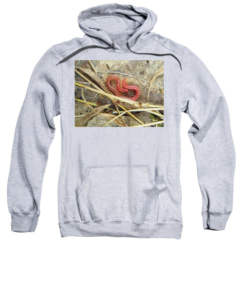 Centipede Sweatshirt featuring the photograph Red Soil Centipede - Strigamia by Mother Nature
