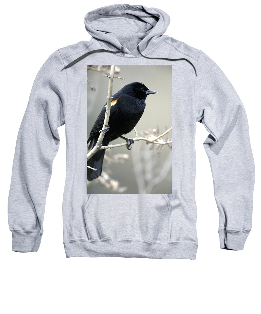 Blackbirds Sweatshirt featuring the photograph Red-winged Blackbird Agelaius by Philippe Henry