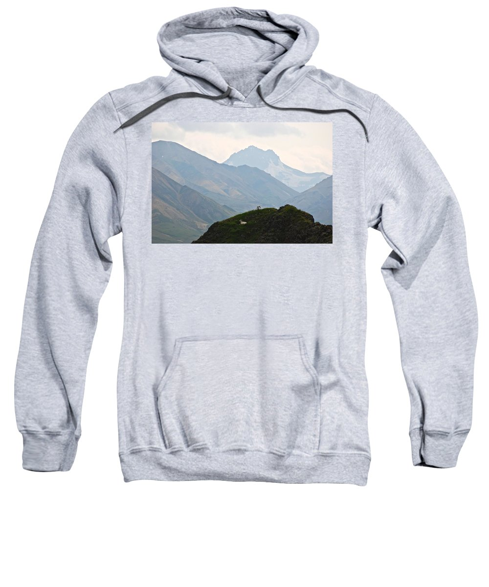 Danali National Park Sweatshirt featuring the photograph Resting Dall Sheep by Eric Tressler