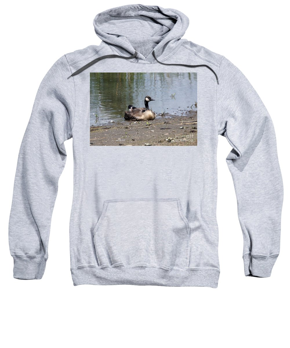 Goose Sweatshirt featuring the photograph Resting by Lori Tordsen