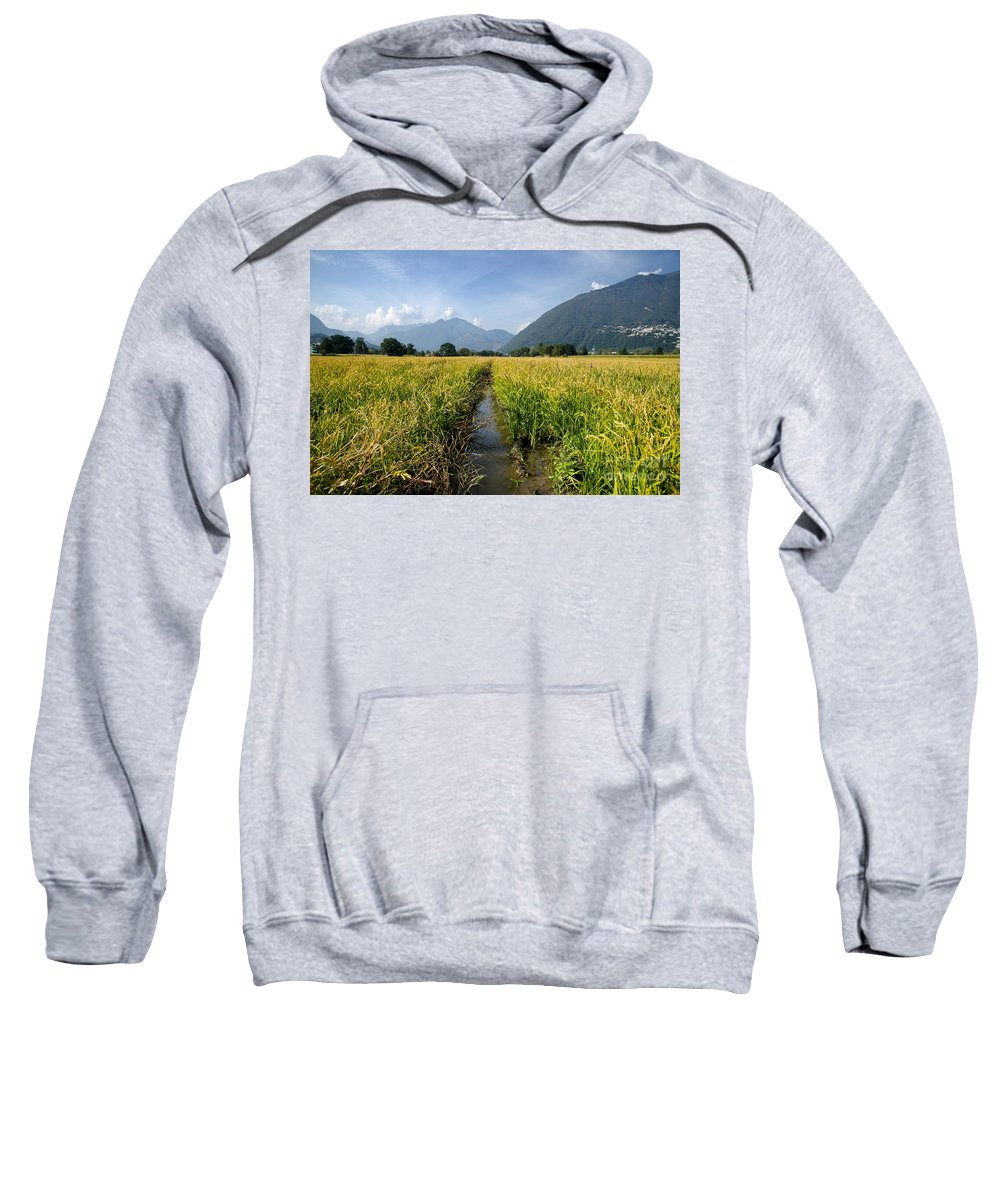 Rice Sweatshirt featuring the photograph Rice Field by Mats Silvan