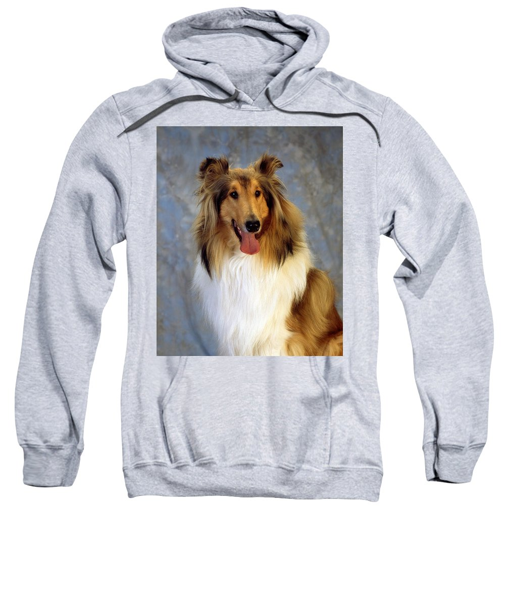 Dogs Sweatshirt featuring the photograph Rough Collie Dog by The Irish Image Collection