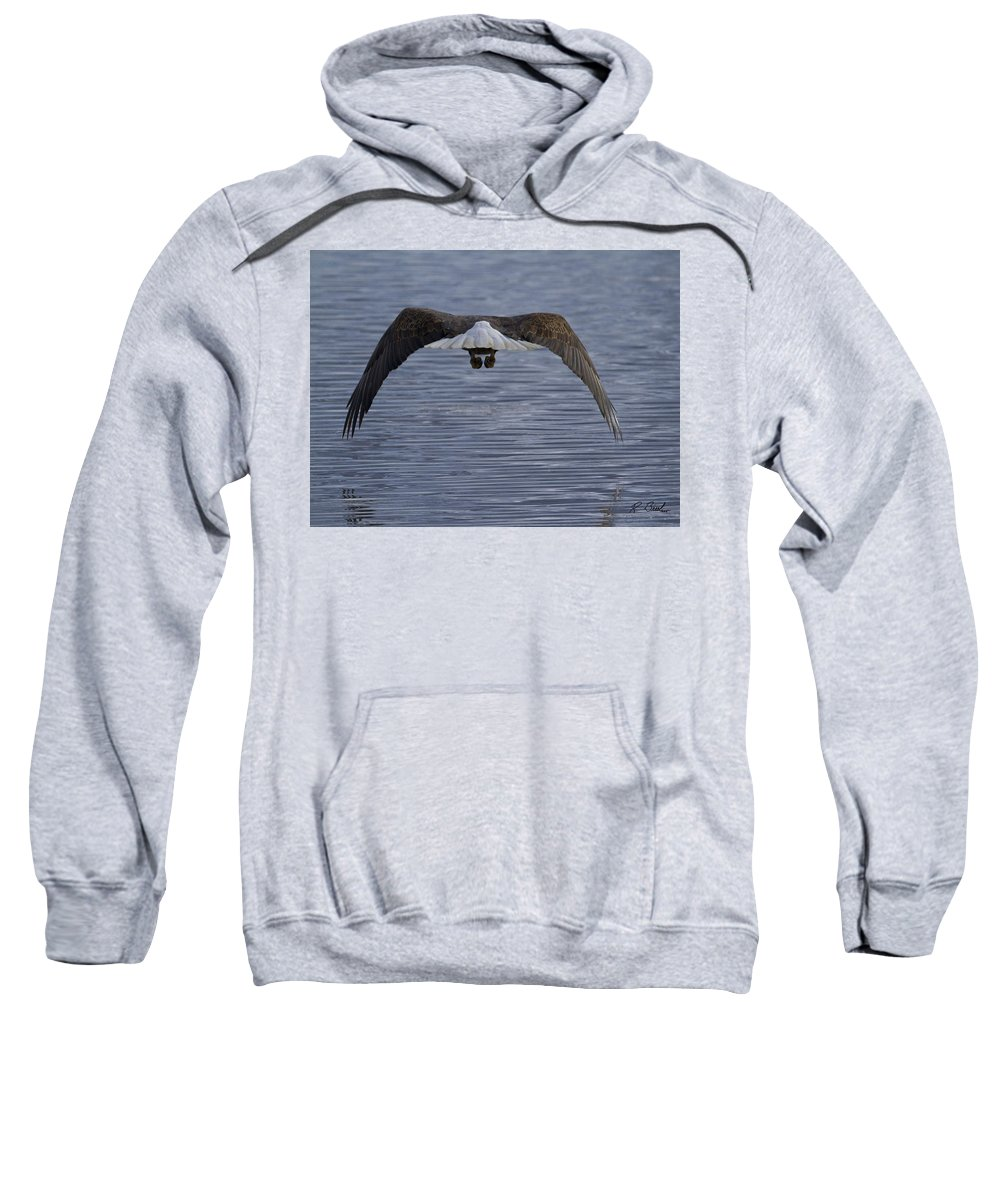 American Bald Eagle In Flight Yellowstone Sweatshirt featuring the photograph Sail Away by R Breslaw