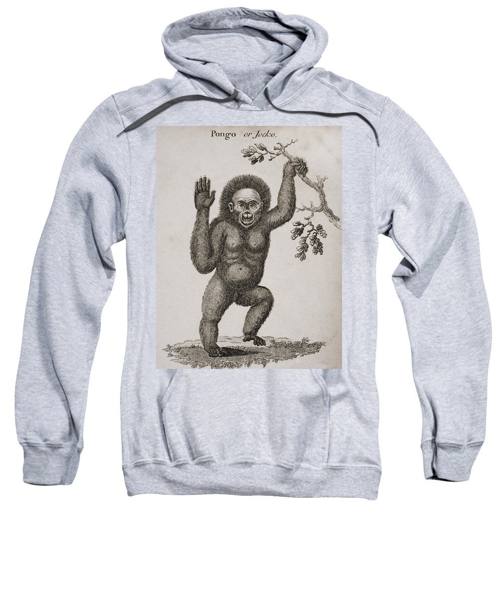 Animal Sweatshirt featuring the photograph Satyrus, Ourang Outang. Pongo Or Jocko by Ken Welsh