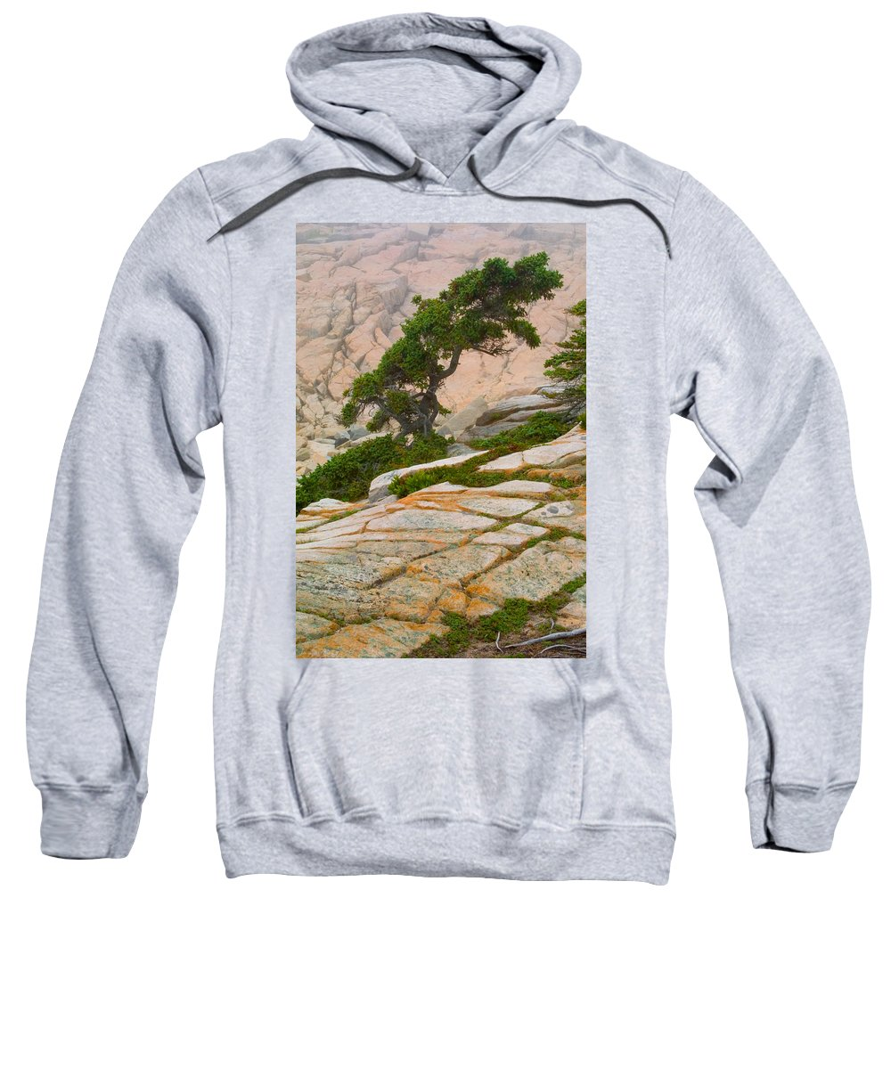 Pitch Pine Sweatshirt featuring the photograph Schoodic Cliffs by Brent L Ander