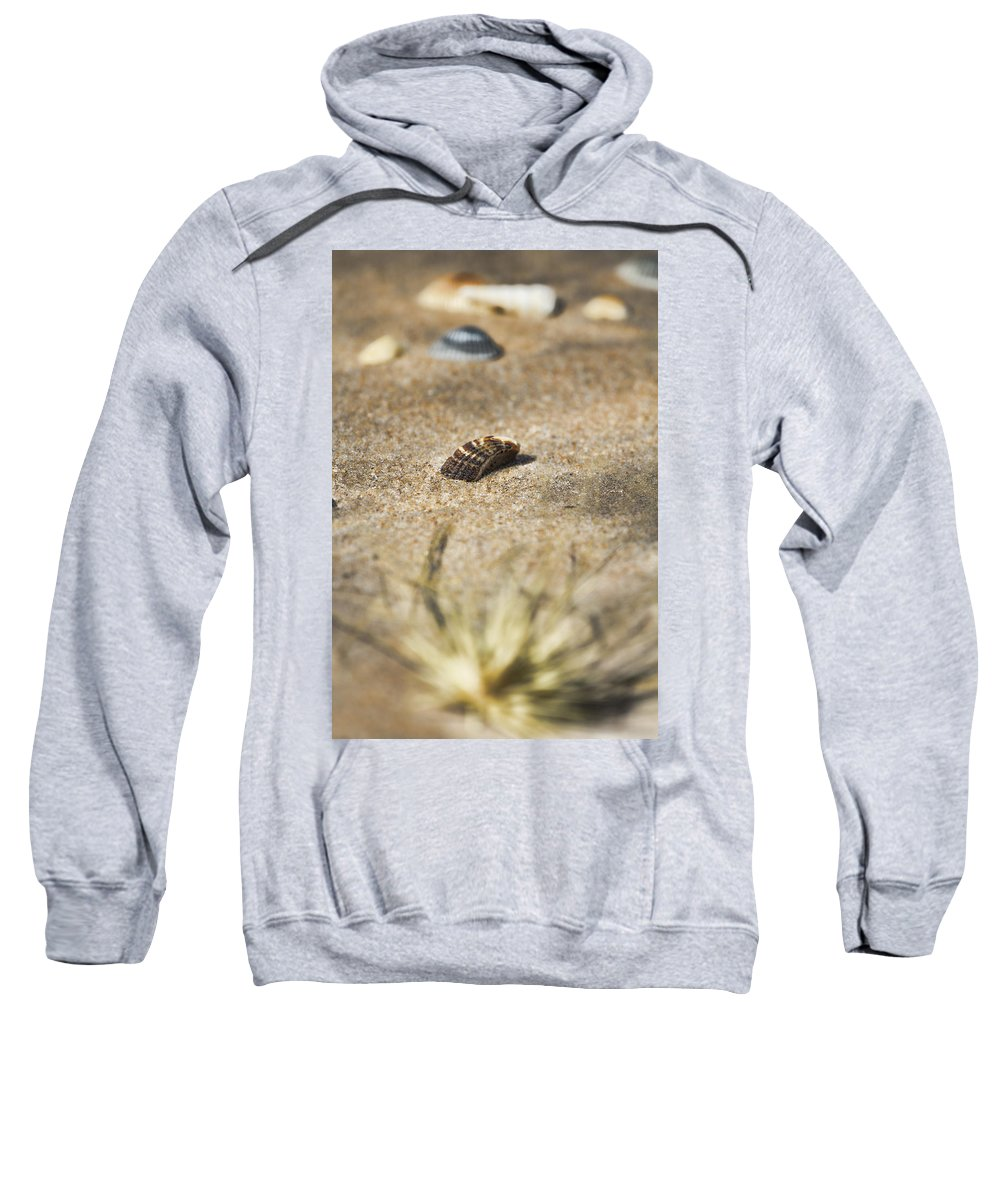 Seashells Sweatshirt featuring the photograph Seahells V3 by Douglas Barnard