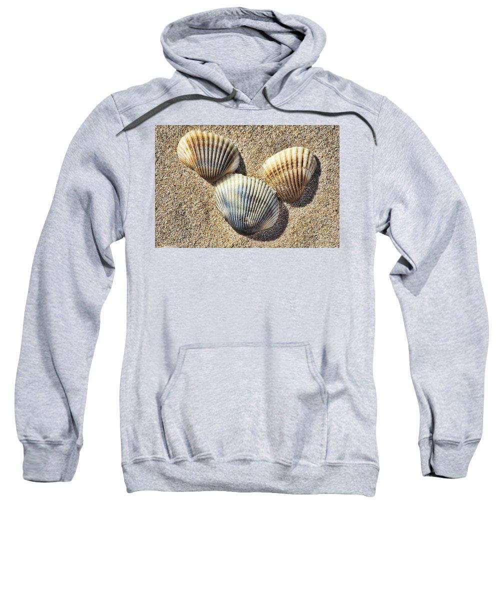 Shells Sweatshirt featuring the photograph Seashells V2 by Douglas Barnard