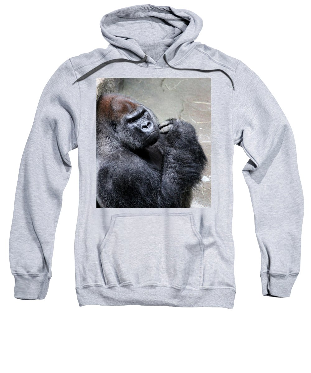 Gorilla Sweatshirt featuring the photograph Serious Look by Rosanne Jordan