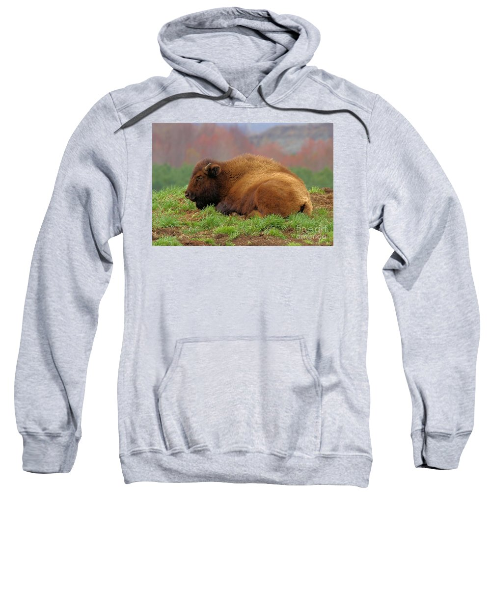 Bison Sweatshirt featuring the photograph Siesta by Adam Jewell
