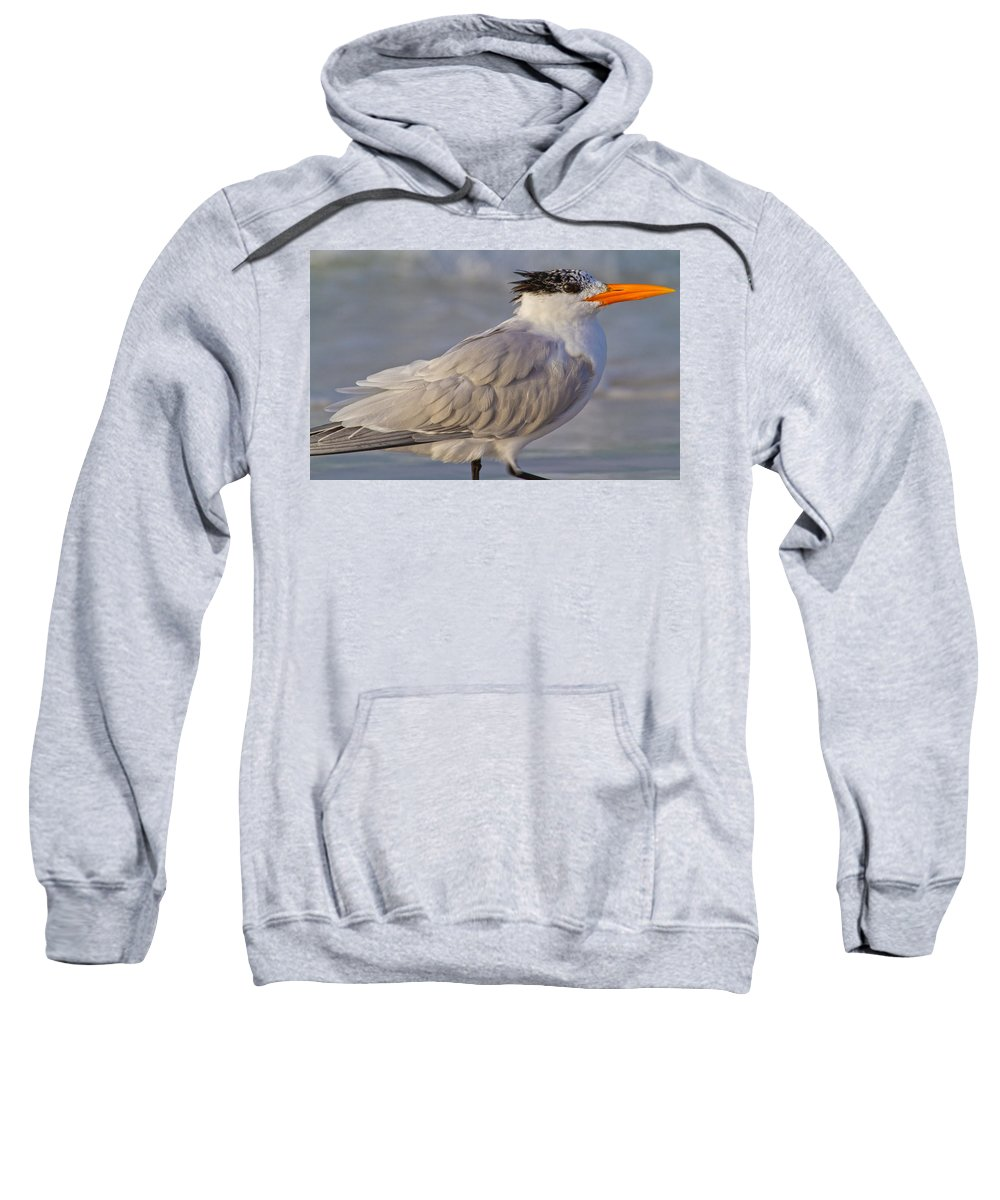 Royal Sweatshirt featuring the photograph Siesta Key Royal Tern by Betsy Knapp