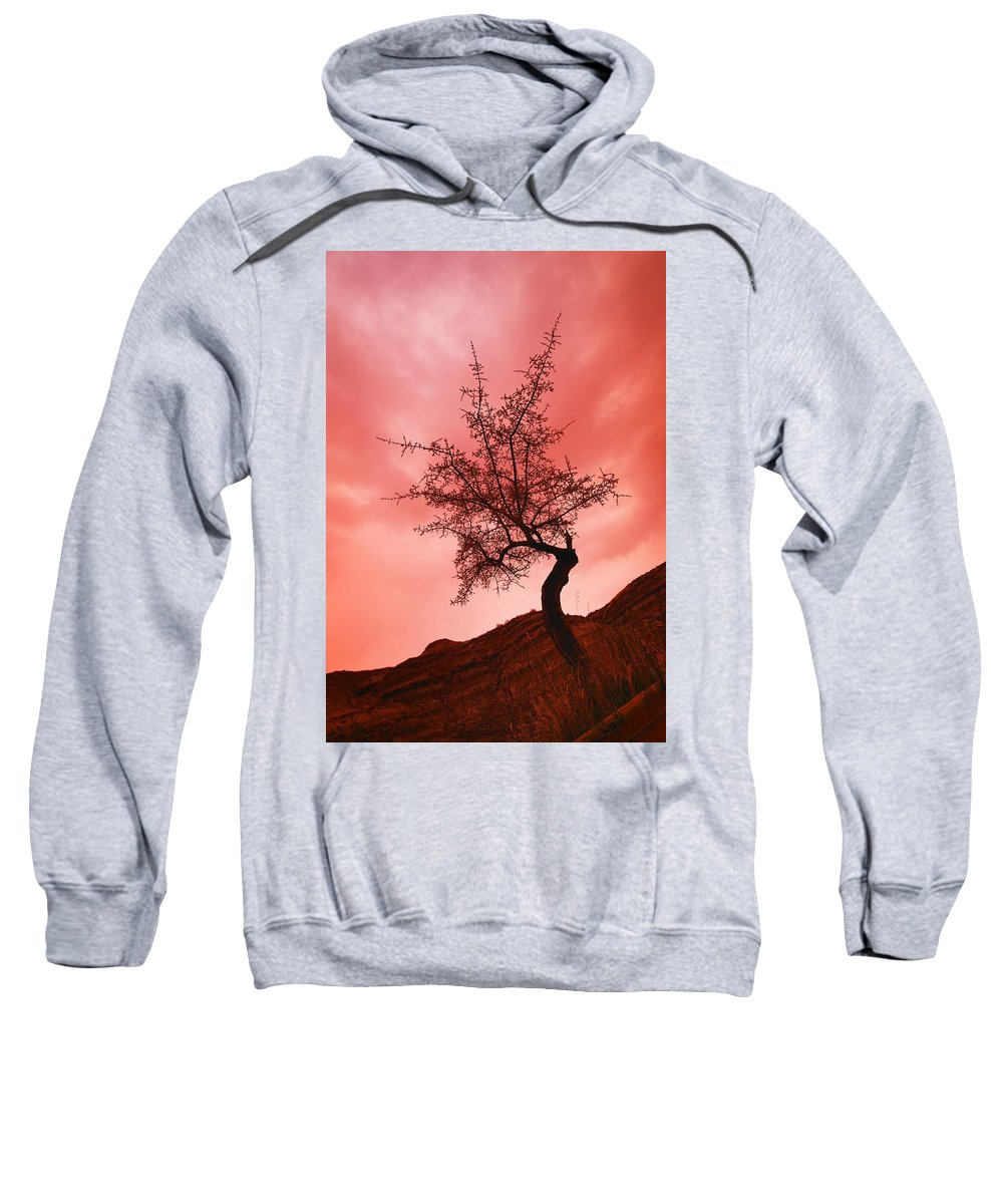 Sunset Sweatshirt featuring the photograph Silhouette Of Shrub Tree by Don Hammond