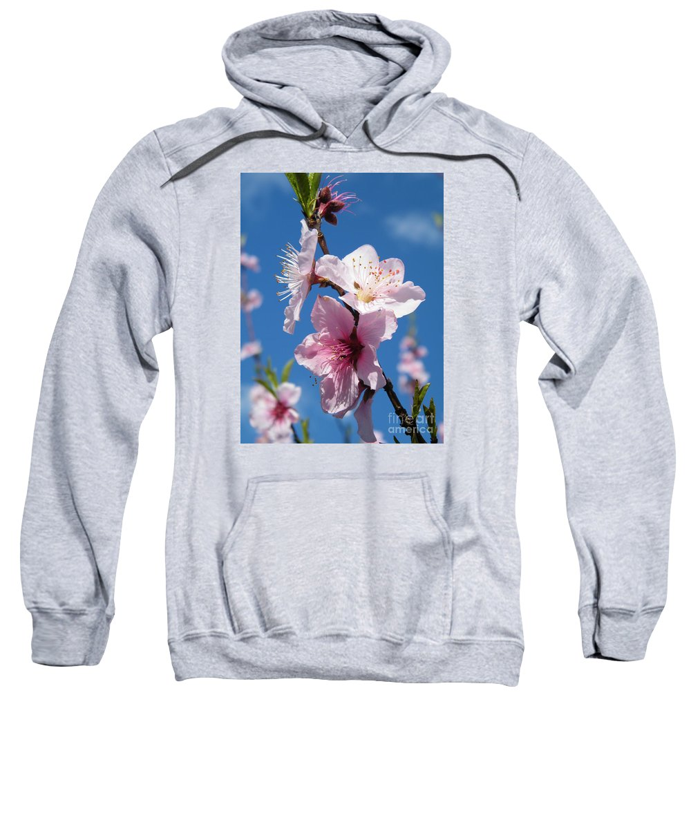 Cherry Blossoms Sweatshirt featuring the photograph Sky High Cherry Blossoms by Cheryl Hardt Art