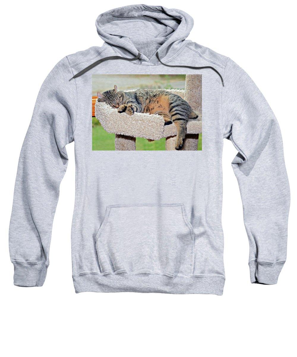 Kitty Sweatshirt featuring the photograph Sleeping Cat by Susan Leggett