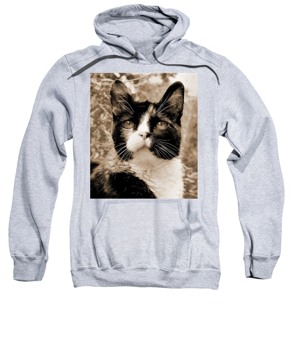 Cat Sweatshirt featuring the photograph Souls Great And Small 2 by Rory Sagner