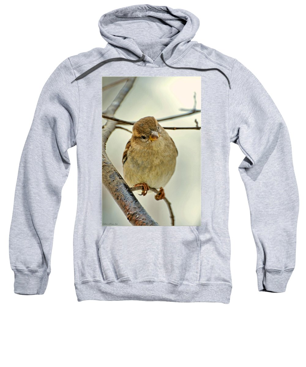 Nature Sweatshirt featuring the photograph Sparrow On A Twig by Debbie Portwood