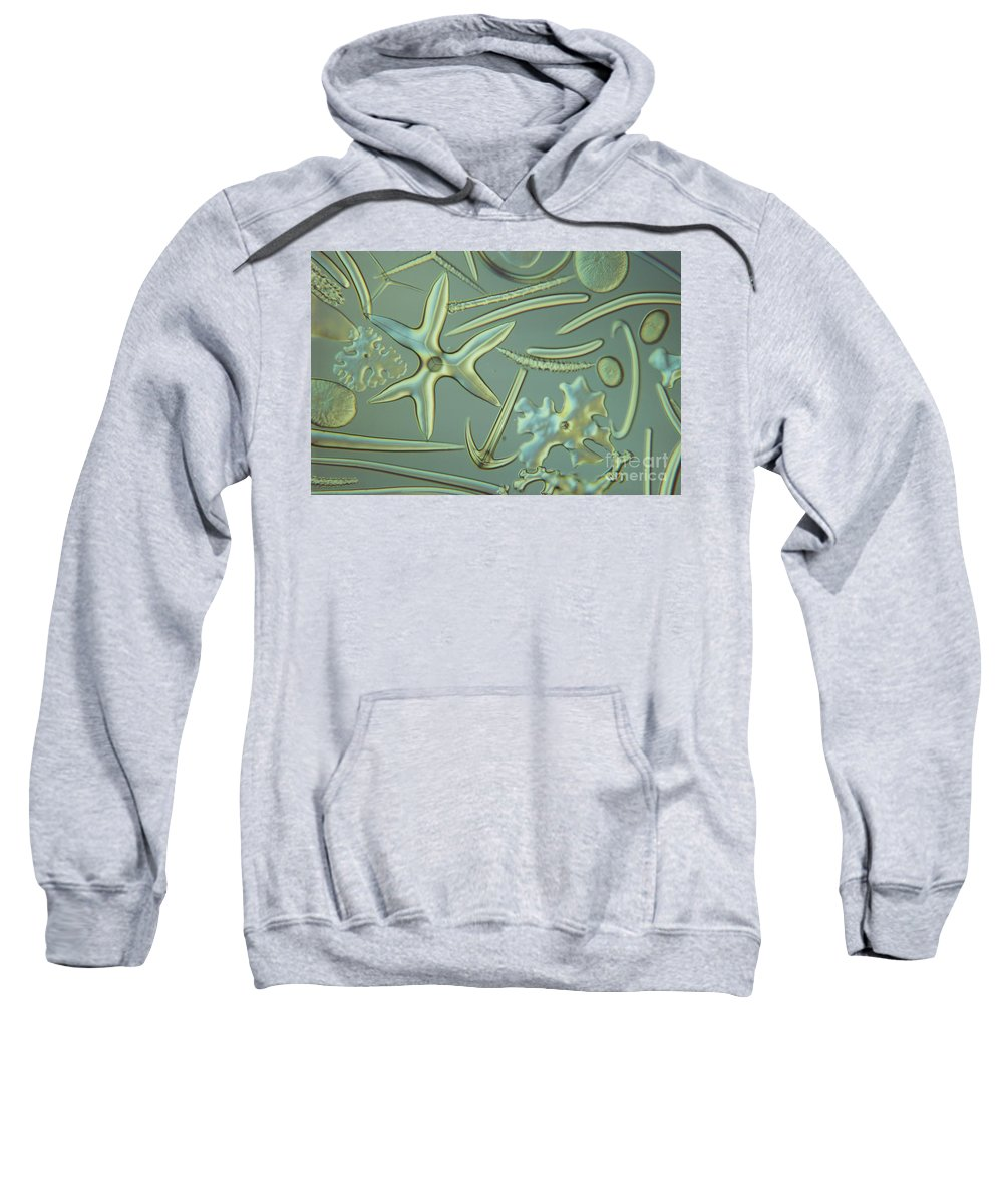 Zoology Sweatshirt featuring the photograph Spicules Of Sponges & Sea Cucumber Lm by M. I. Walker
