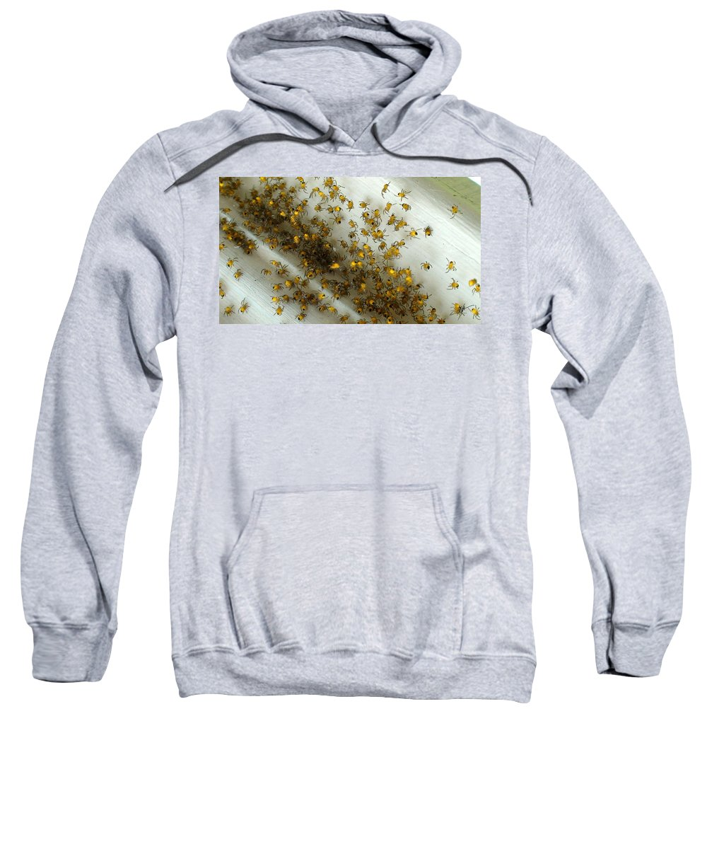 Sweatshirt featuring the photograph Spiders Spiders Spiders by Mark Valentine