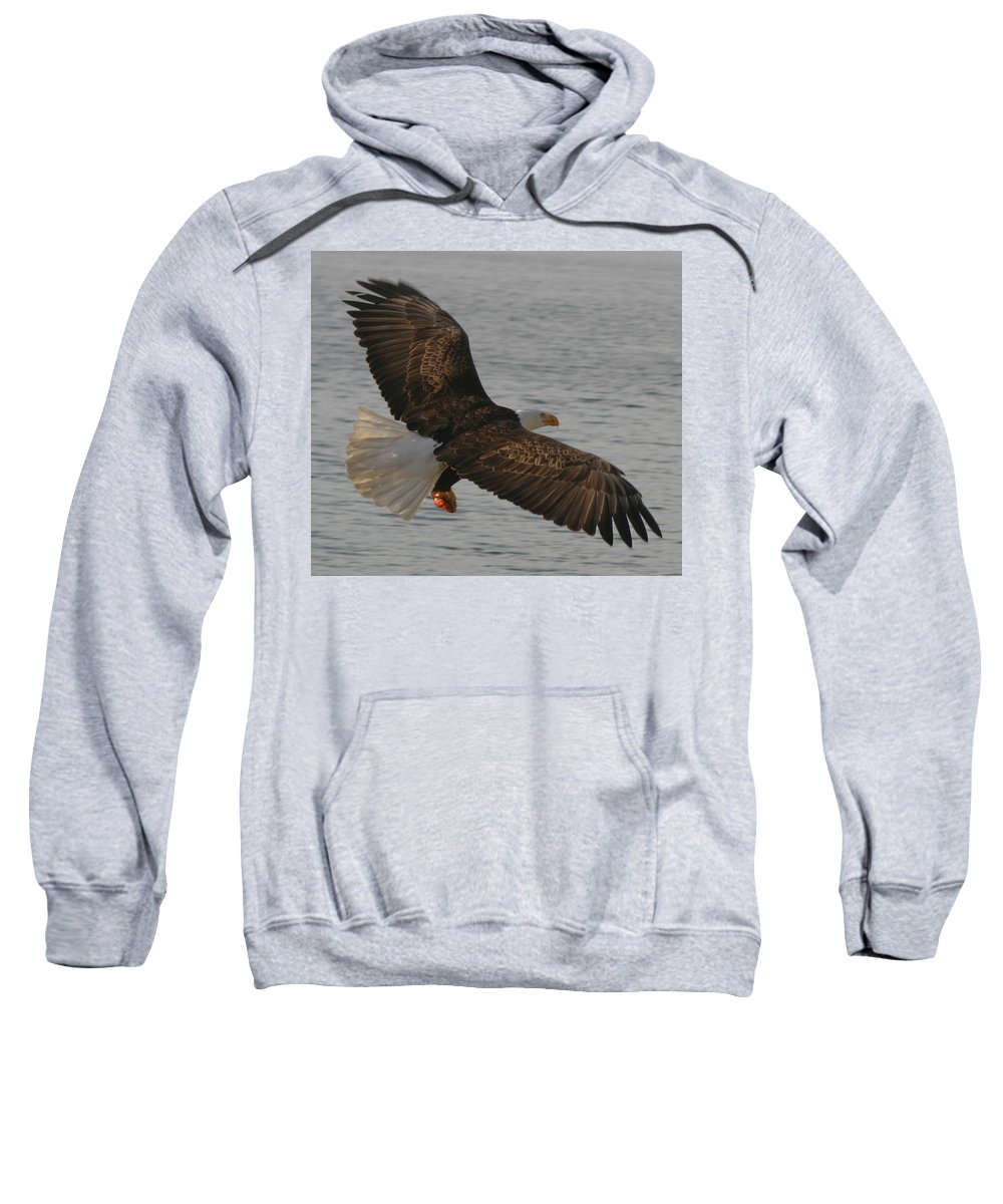 Bald Eagle Flying In Puget Sound Sweatshirt featuring the photograph Spread Eagle by Kym Backland