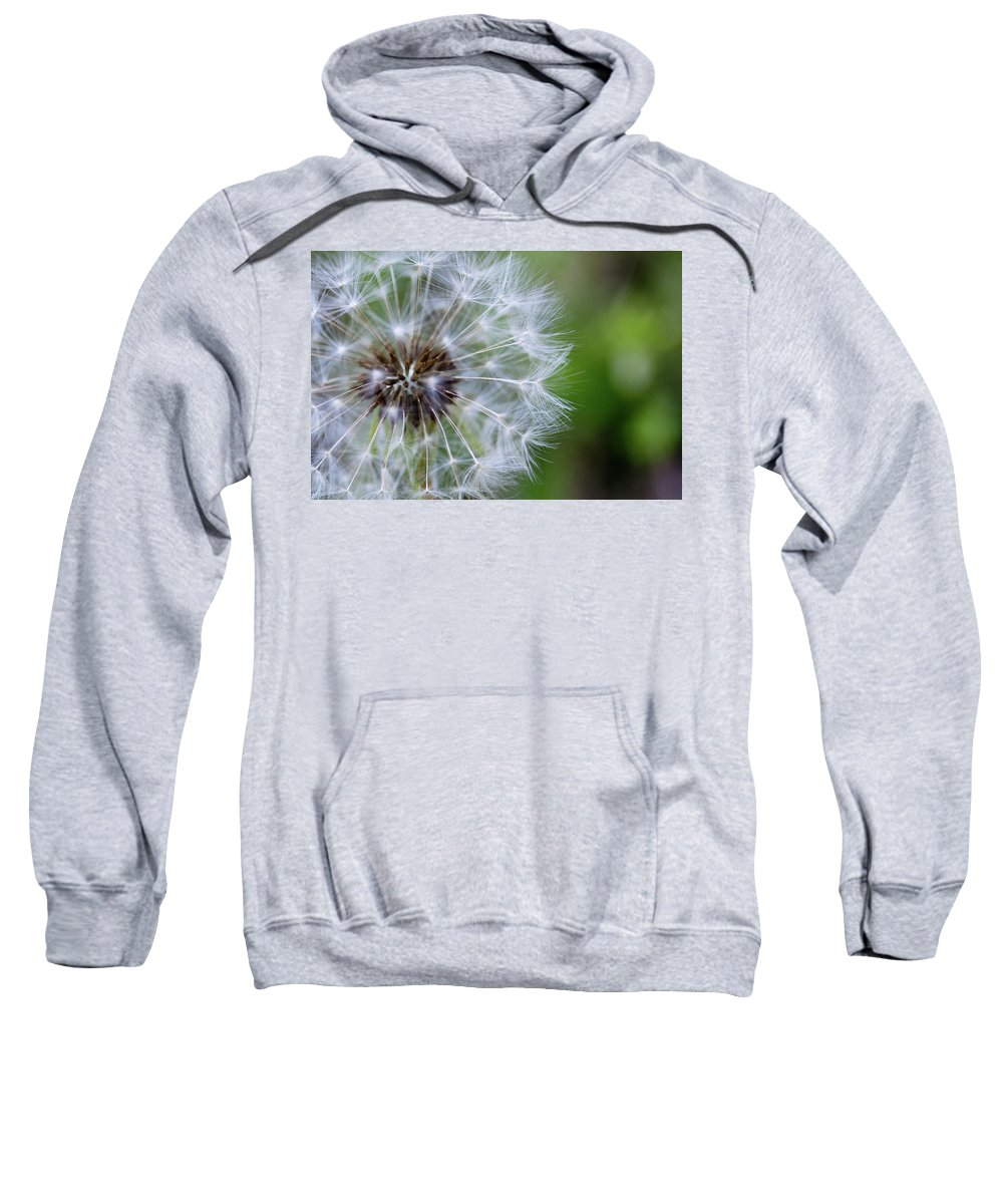 Dandelion Sweatshirt featuring the photograph Spring Dandelion by Pam Fong