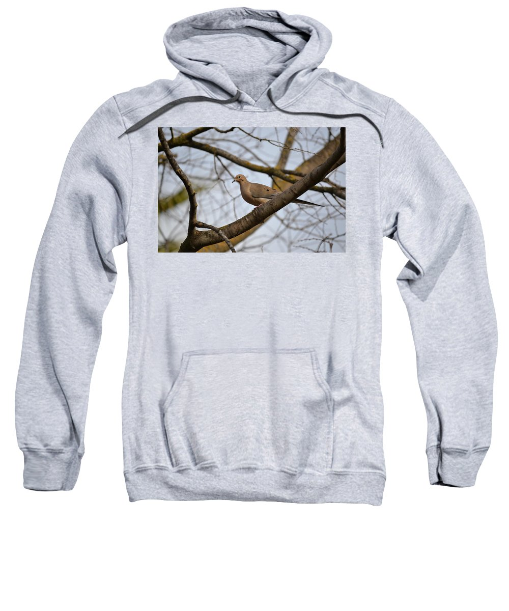Mourning Dove Sweatshirt featuring the photograph Spring Is Coming by Bill Owen