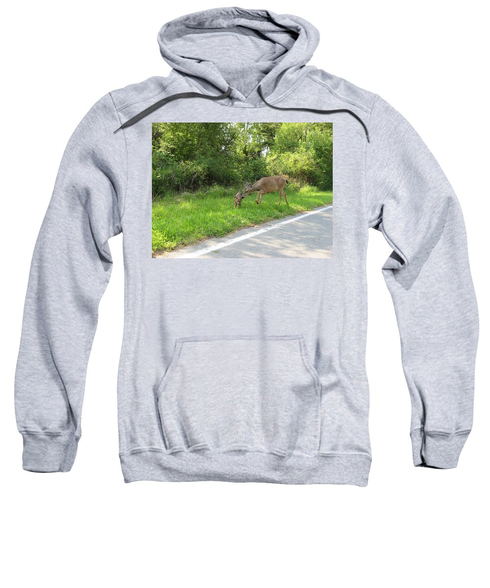 Mama Deer Pushes Baby Bambi Sweatshirt featuring the photograph Stay Off The Road Bambi by Kym Backland