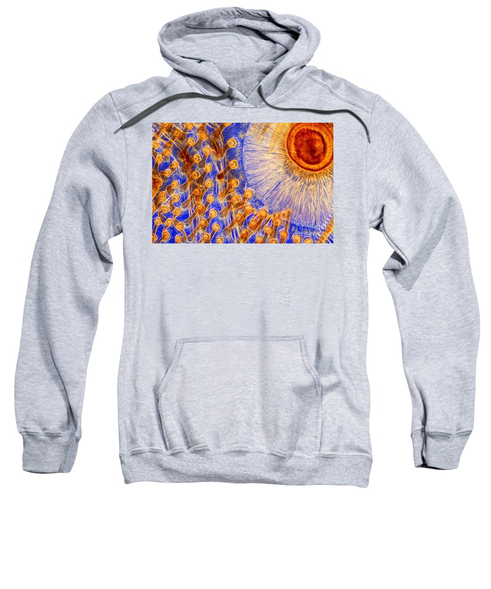 Histology Sweatshirt featuring the photograph Suckers On Foreleg Of Male Diving Beetle by M I Walker