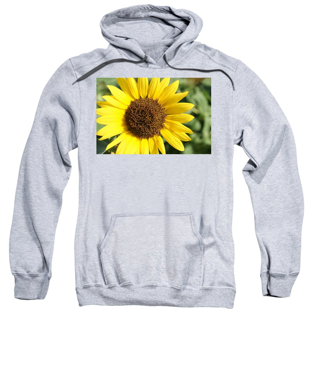 Sunflower Sweatshirt featuring the photograph Sunflower by Alan Hutchins