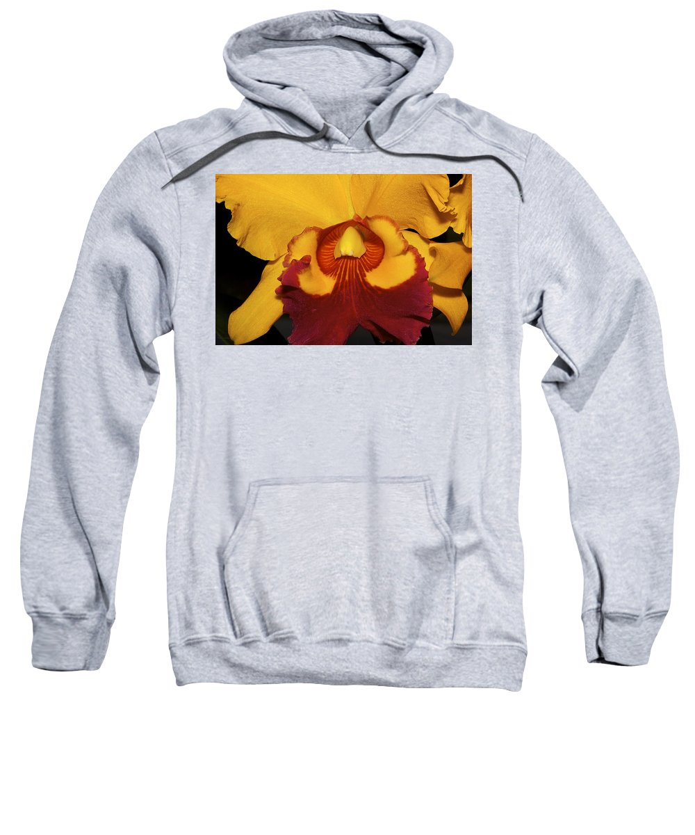 Orchid Sweatshirt featuring the photograph Sunny Yellow Orchid by Phyllis Denton