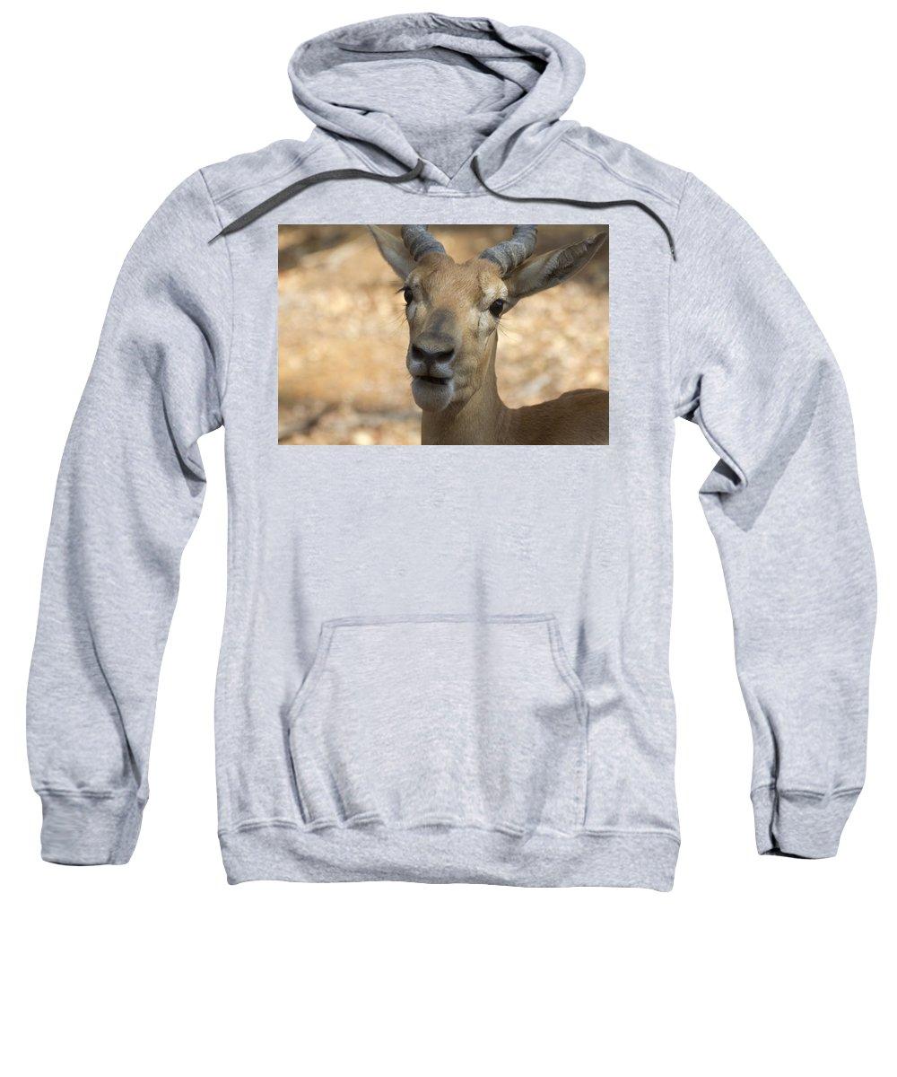 Antelope Sweatshirt featuring the photograph Surprise by Douglas Barnard