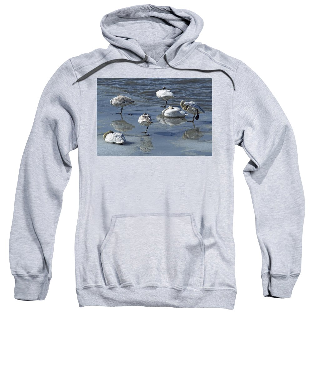 Light Sweatshirt featuring the photograph Swans On The Ice Along The Tagish by Robert Postma
