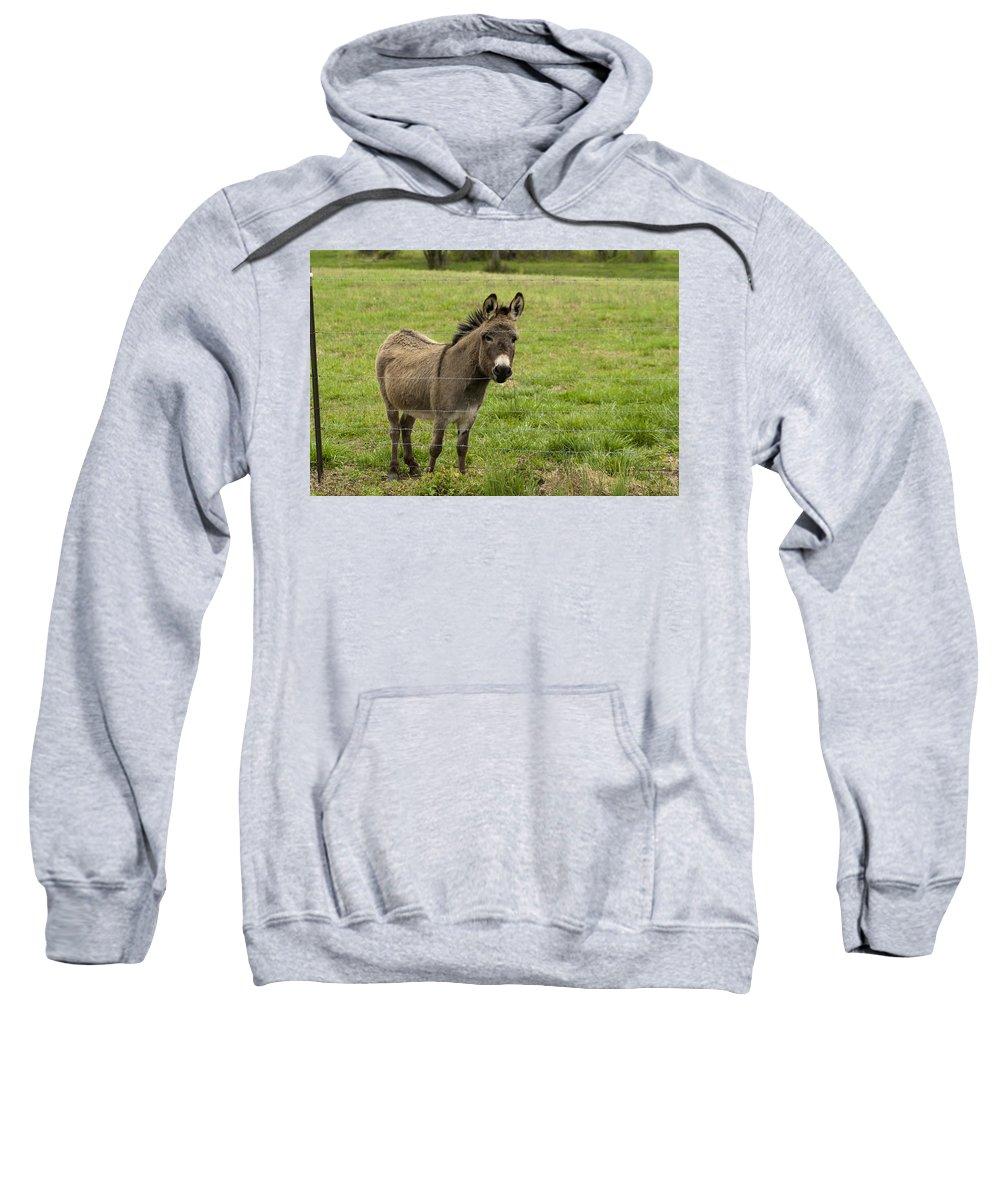 Donkey Sweatshirt featuring the photograph Sweet Little Donkey by Kathy Clark