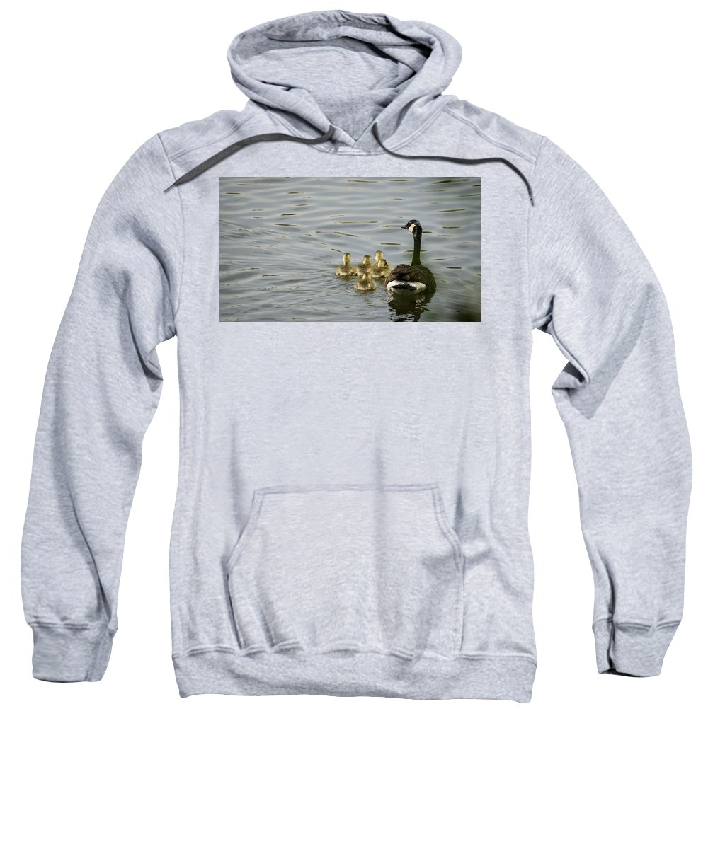 Duckling Sweatshirt featuring the photograph Swimming Lessons by Heather Applegate