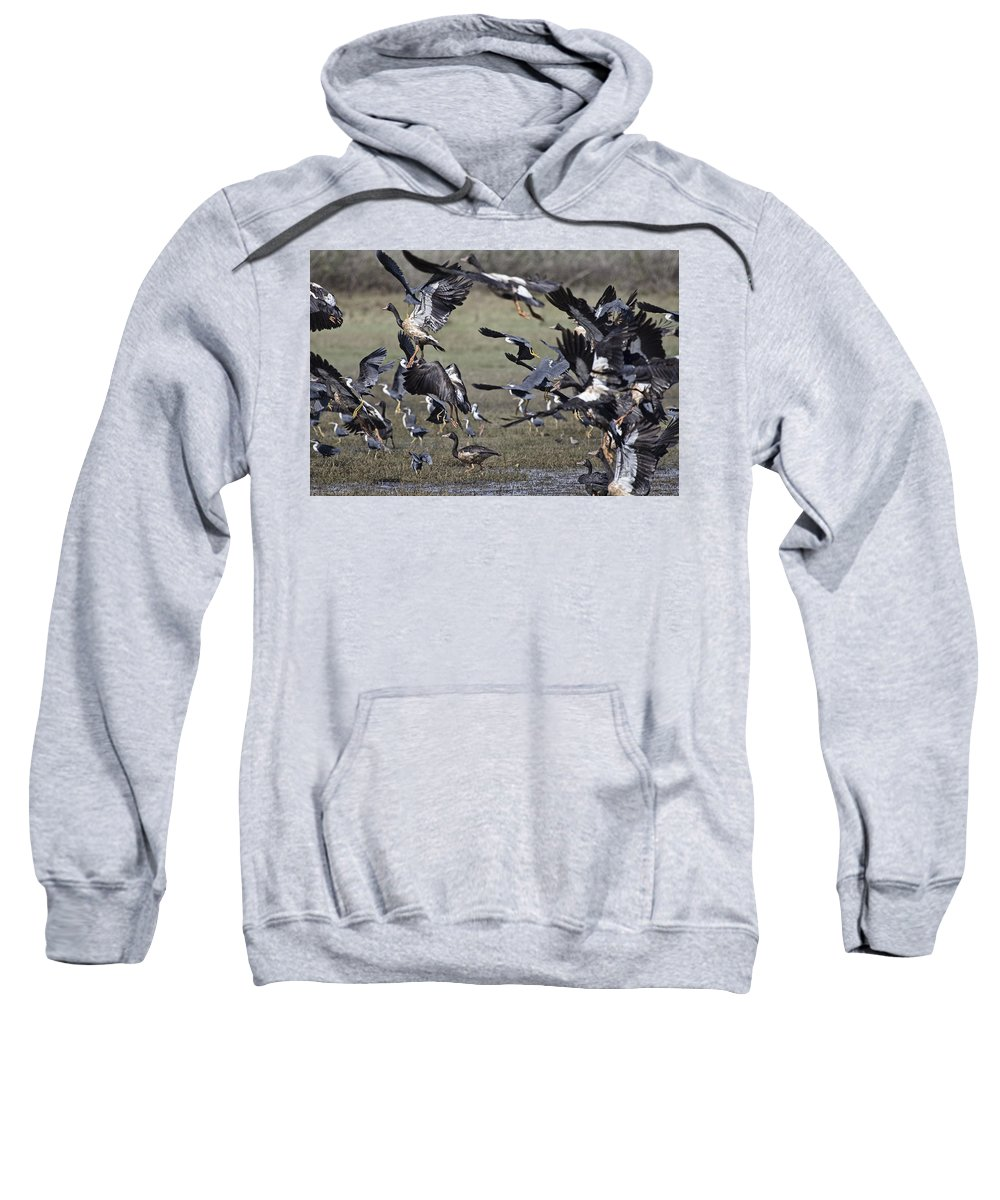 Magpie Geese Sweatshirt featuring the photograph The Billabong V18 by Douglas Barnard
