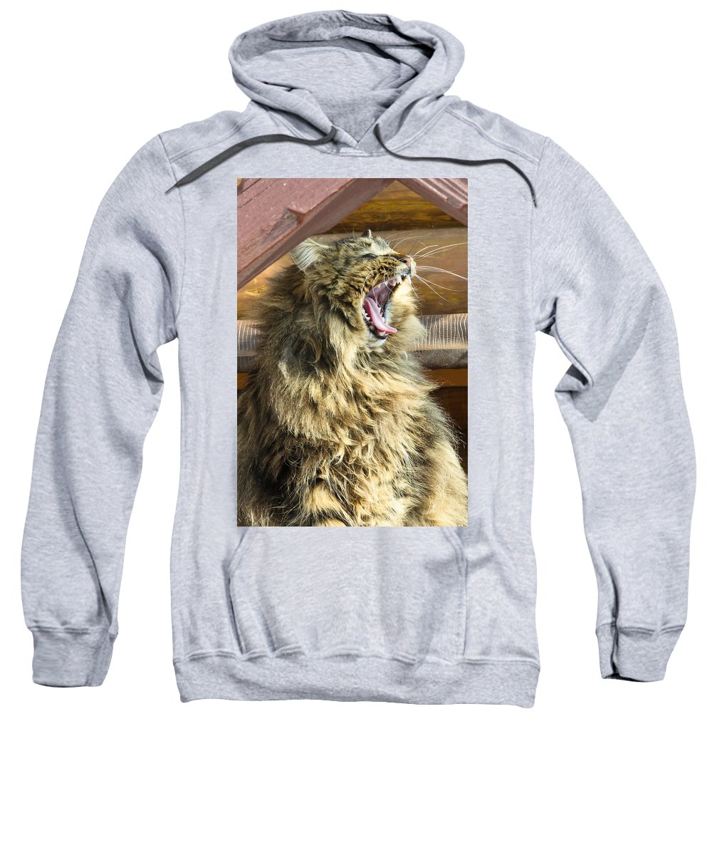 Bay Sweatshirt featuring the photograph The Cat Who Loves To Sing by Michael Goyberg