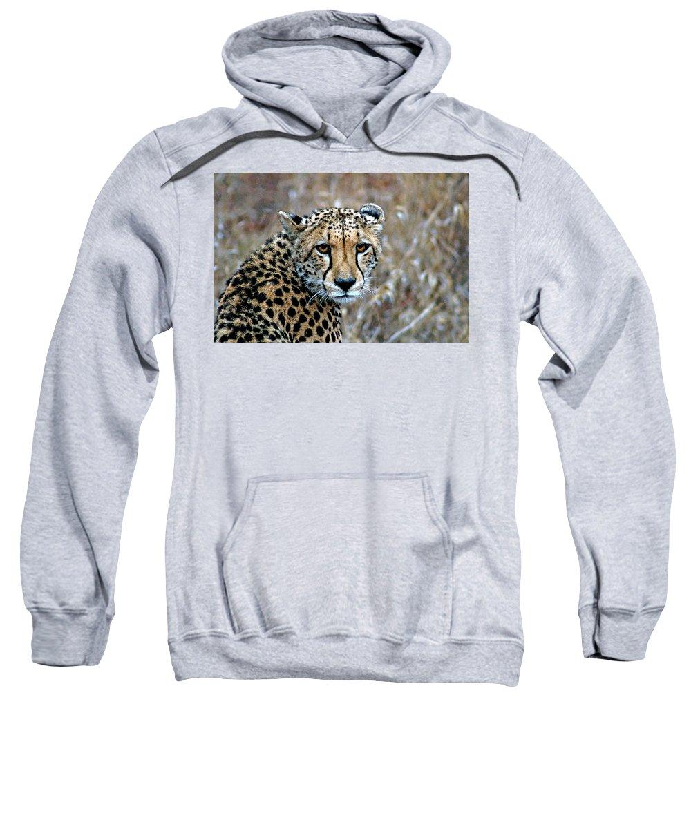 Acinonyx Sweatshirt featuring the photograph The Cheetah Stare by Paul Fell