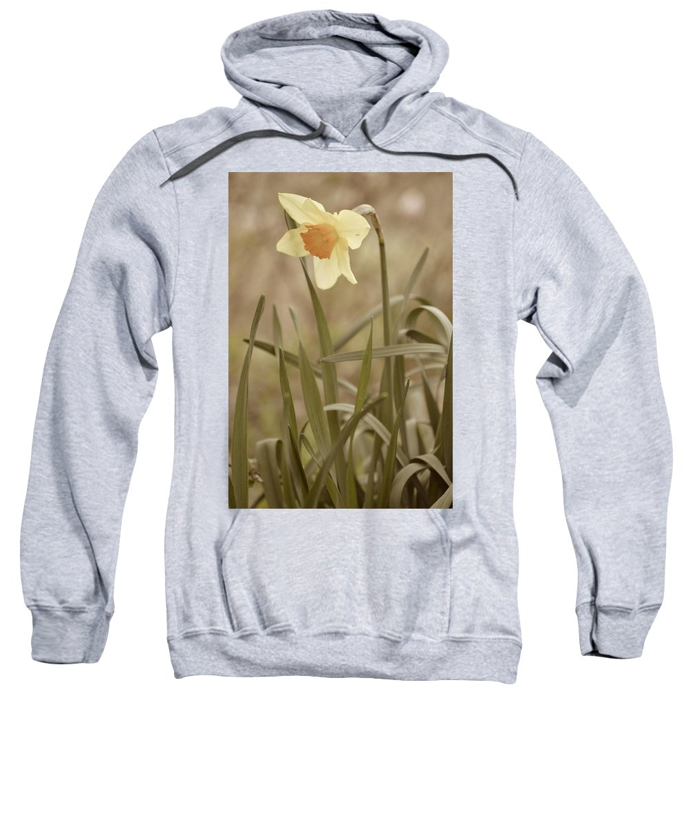 Flower Sweatshirt featuring the photograph The Daffodil In Partial Sepia by JD Grimes