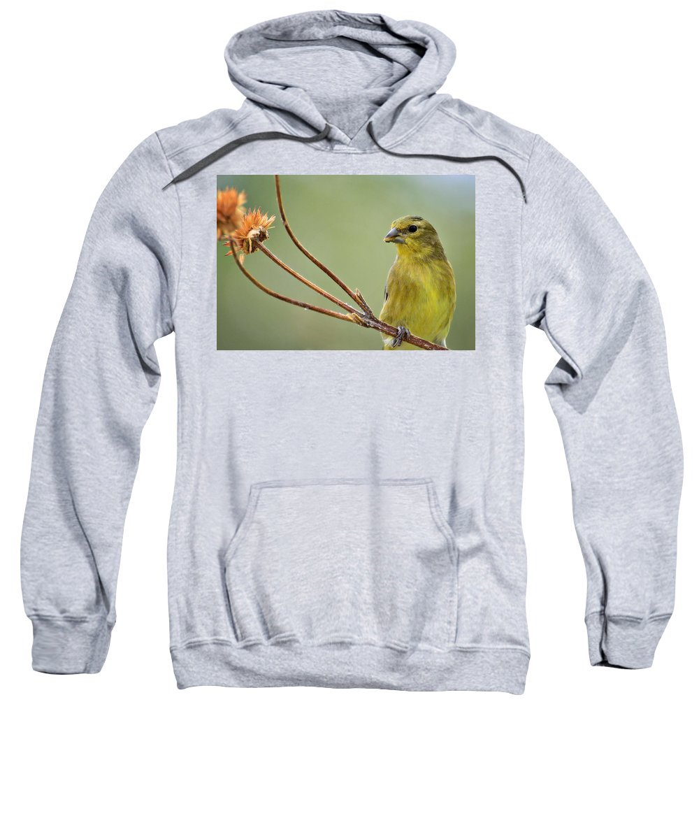 Lesser Gold Finch Sweatshirt featuring the photograph The Finch by Saija Lehtonen