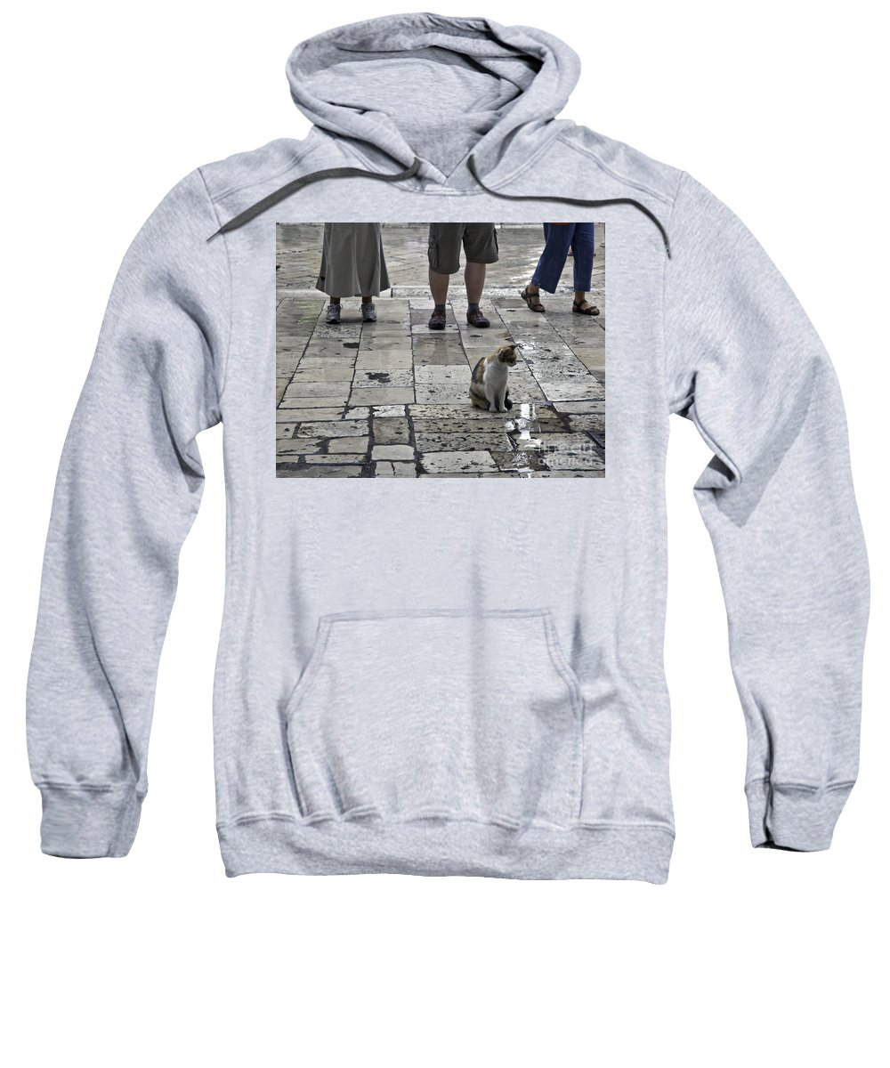 Cat Sweatshirt featuring the photograph The Tourists by Madeline Ellis