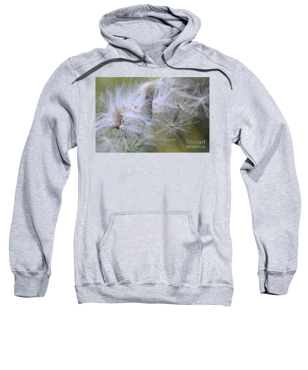 Thistle Seeds Sweatshirt featuring the photograph Thistle Seeds by Bob Christopher