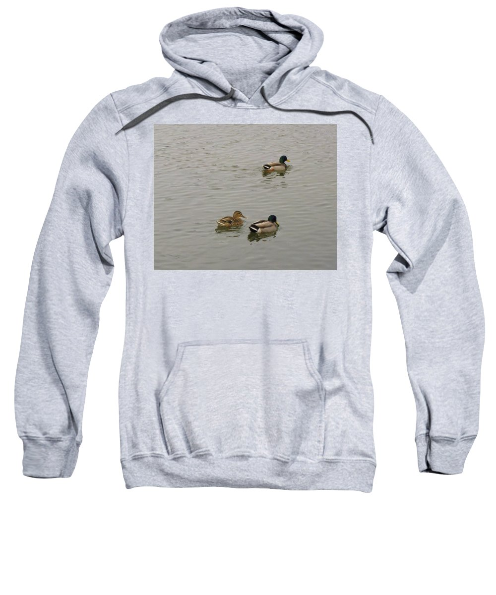 Duck Sweatshirt featuring the photograph Three's A Crowd by John Greaves
