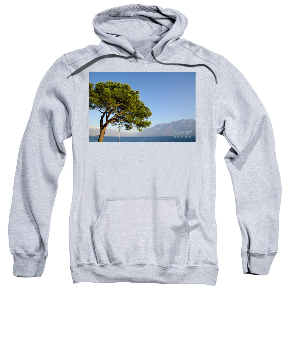 Tree Sweatshirt featuring the photograph Tree Standing Close To A Lake by Mats Silvan