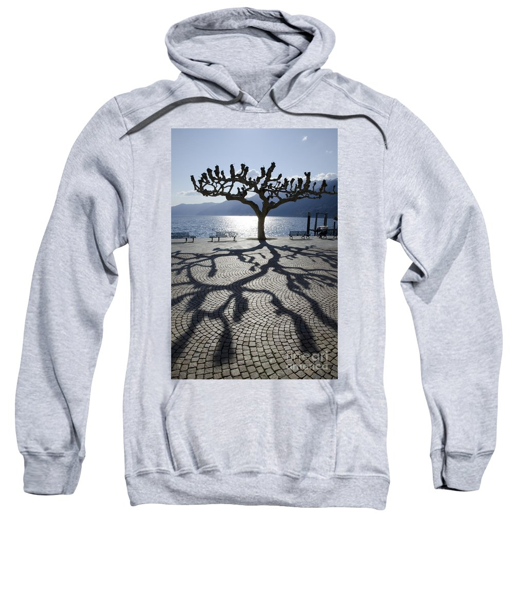 Tree Sweatshirt featuring the photograph Tree With Shadow by Mats Silvan