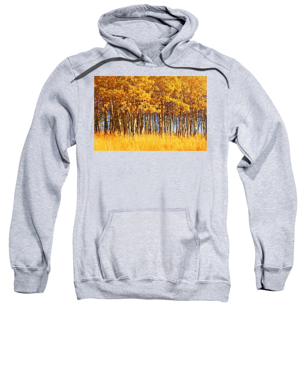Autumn Sweatshirt featuring the photograph Trees In Autumn by Don Hammond