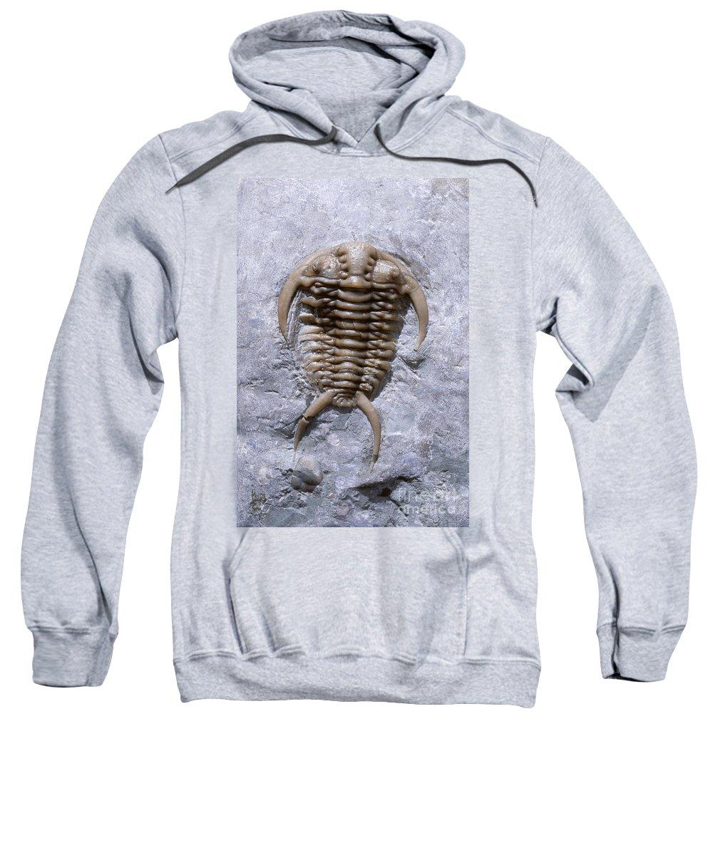 Trilobite Sweatshirt featuring the photograph Trilobite by Francois Gohier and Photo Researchers