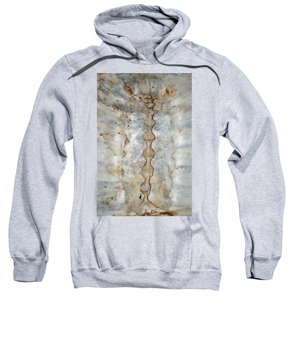 Usa Sweatshirt featuring the photograph Turtle Spine by LeeAnn McLaneGoetz McLaneGoetzStudioLLCcom