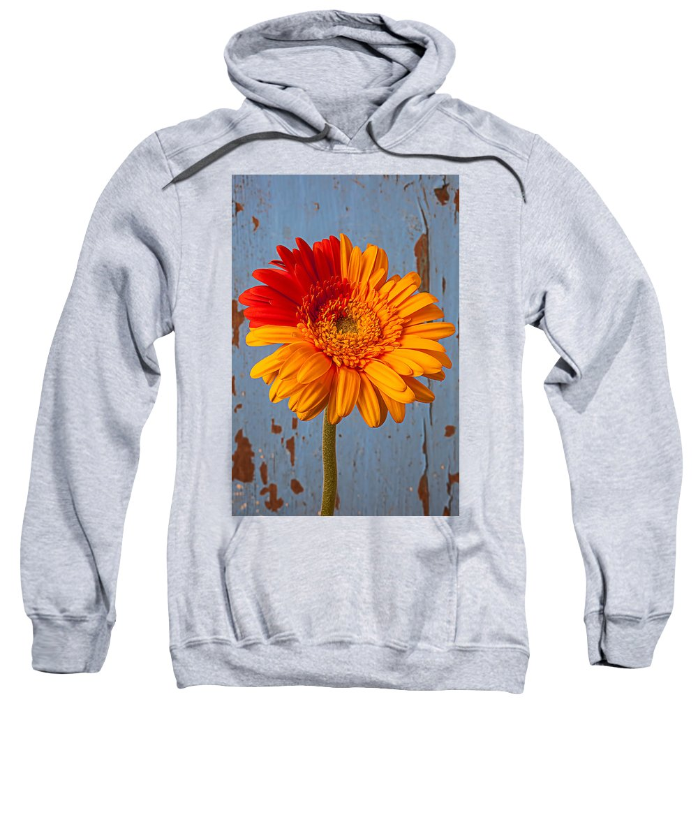 Gerbera Sweatshirt featuring the photograph Two Color Gerbera Daisy by Garry Gay