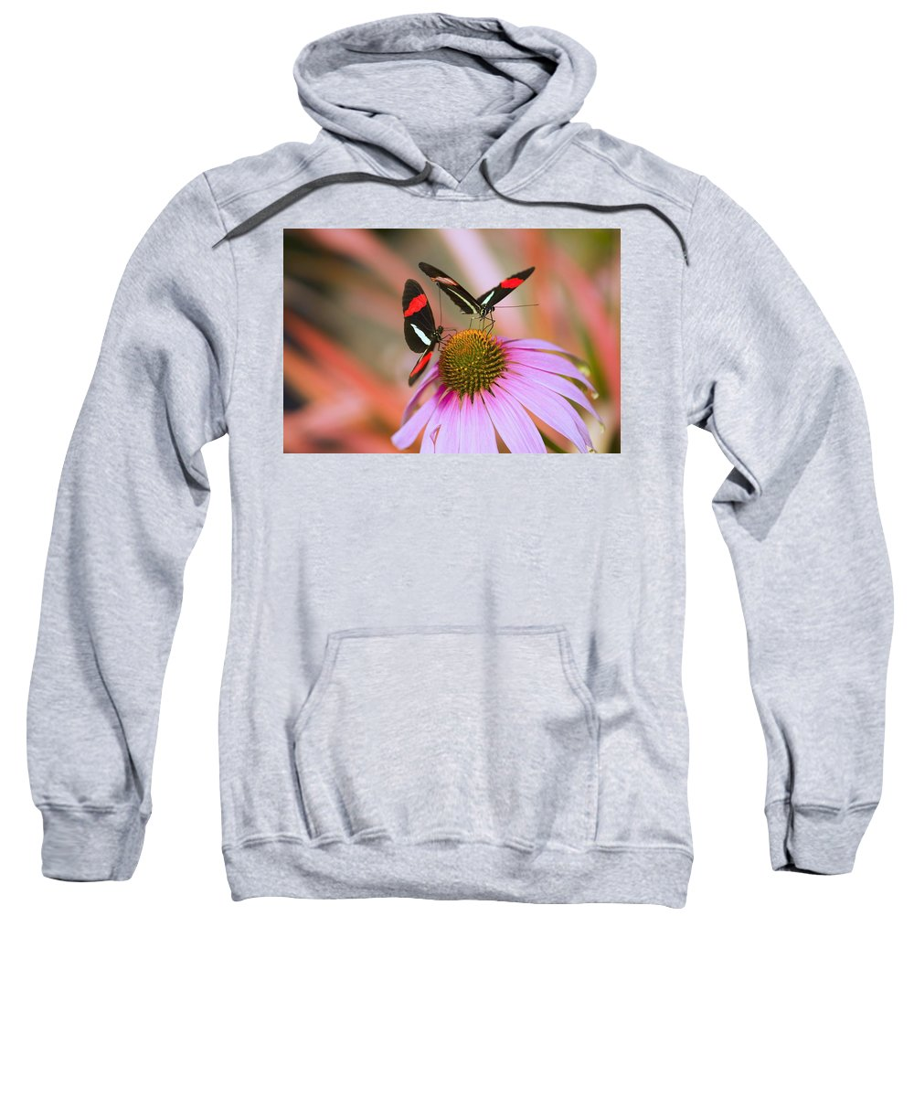 Echinacea Sweatshirt featuring the photograph Two Colorful Butterflies On Cone Flower by Craig Tuttle