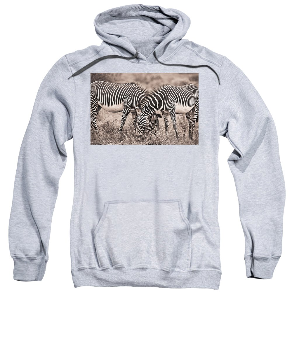 African Sweatshirt featuring the photograph Two Zebras Grazing Together Kenya by David DuChemin