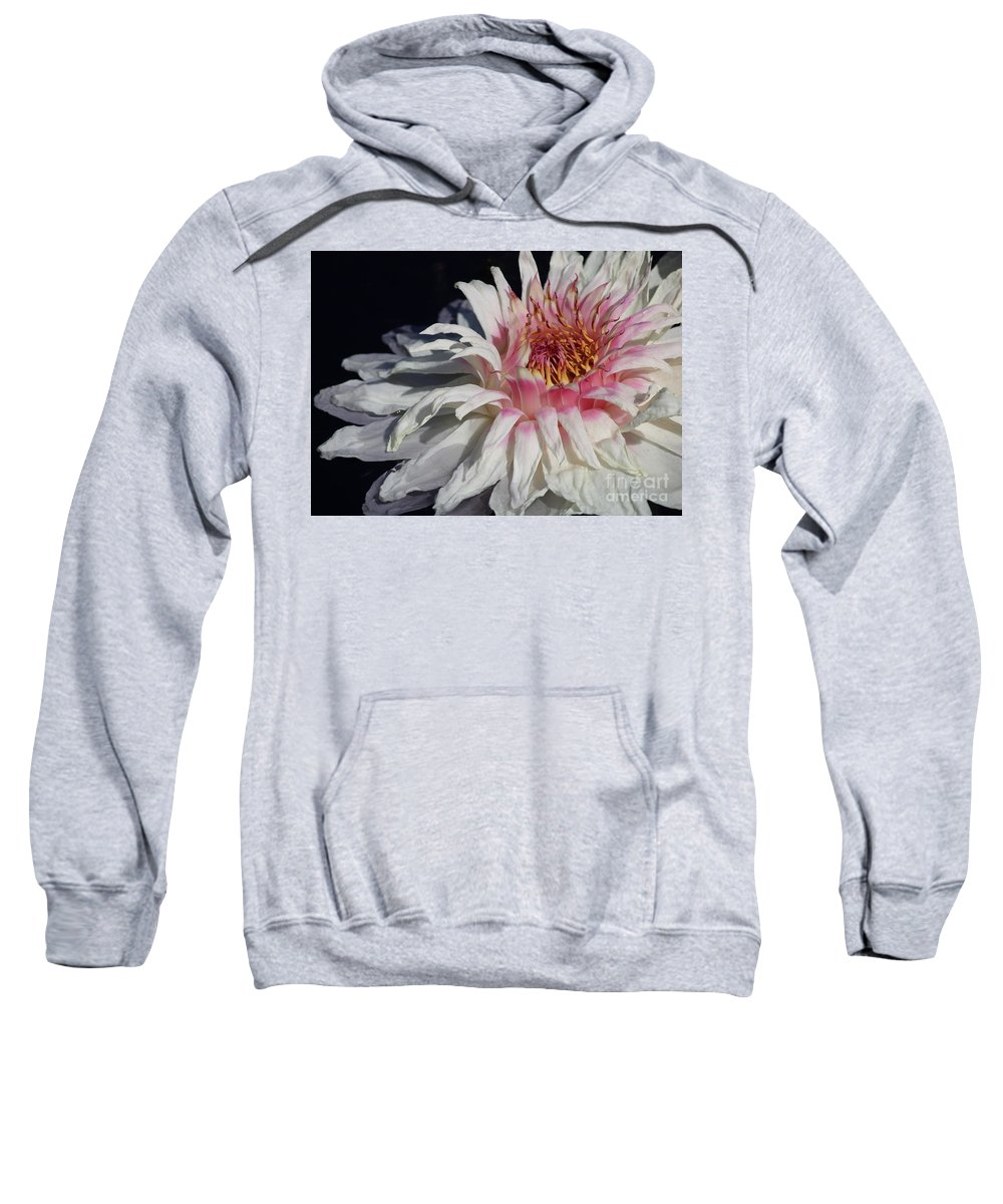 Victoria Water Lily Sweatshirt featuring the photograph Victoria Water Lily by Carol Groenen