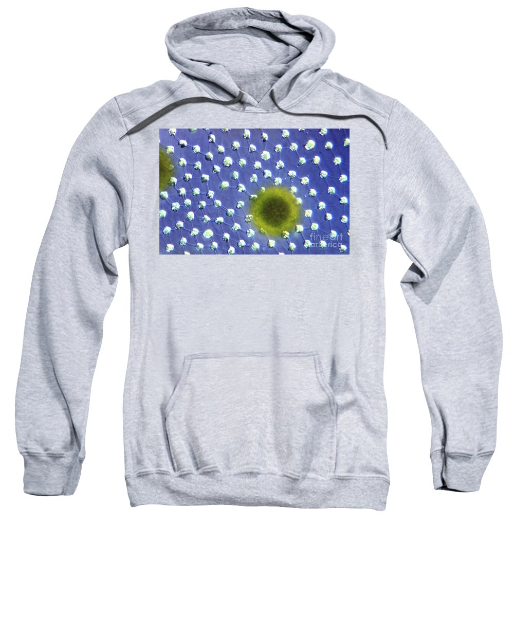 Light Microscopy Sweatshirt featuring the photograph Volvox Aurelia by M. I. Walker
